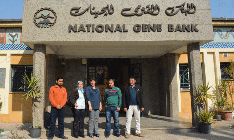 Dr. Gayle Volk, Senior Researcher at the United States Department of Agriculture National Center for Genetic Resources Preservation is visiting Egypt
